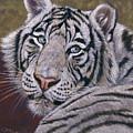 White Tiger  by Svetlana Ledneva-Schukina