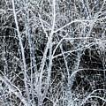 White Tree Black Night by Heather Joyce Morrill
