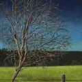 White Tree Of Worden by Rosellen Westerhoff