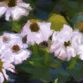 White Triangle Flowers by Alice Gipson