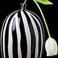 White Tulip In Striped Vase by Garry Gay
