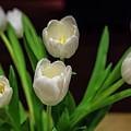 White Tulip by Sean O'Cairde