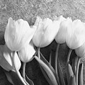 White Tulips Against Wallpaper by Marsha Heiken