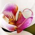 White Veil Orchid by Marilyn Hunt