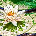White Water Lilies Flower by Jeelan Clark