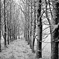 White Winter Pathway by Agusta Gudrun  Olafsdottir