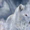 White Wolf by Carol Cavalaris