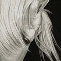 Whitefall by Pat Erickson
