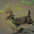 Whitetail Buck by Movie Poster Prints