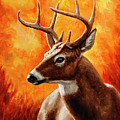 Whitetail Buck Portrait by Crista Forest