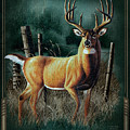 Whitetail Deer by JQ Licensing