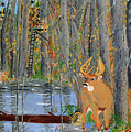Whitetail Deer In Swamp by Swabby Soileau