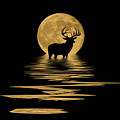 Whitetail Deer In The Moonlight by Shane Bechler