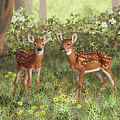 Whitetail Deer Twin Fawns by Crista Forest