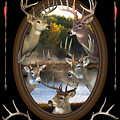 Whitetail Dreams by Shane Bechler