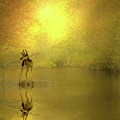 A Silent Autumn Morning by Diane Schuster