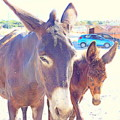 Who Wants A Blue Car When You Can Have Donkeys by Hilde Widerberg