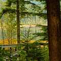 Whonnock Lake Through The Trees by Sharon Talson