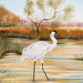Whooping Cranes-jp3156 by Jean Plout