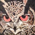 Whoot Owl by Lisa Bowersock