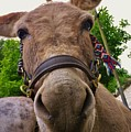 Why The Long Face? by Richard Brookes