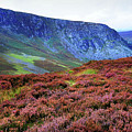 Wicklow Heather Carpet by Jenny Rainbow