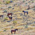 Wild Horses by AJ Schibig