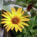 Wide Open In Bloom  by Jeff Swan