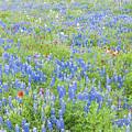 Wild About Wildflowers Of Texas. by Usha Peddamatham