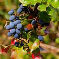 Wild Berries by Shanna Hyatt