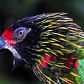 Wild Bird by David Lee Thompson