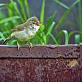 Wild Bird In A Natural Habitat.  by Oksana Ariskina