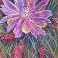 Wild Bitterroot Flower by Dawn Senior-Trask