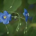 Wild Blue by Craig Voth