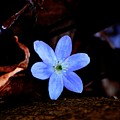 Wild Blue by David Lane