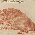 Wild Boar by German 18th Century