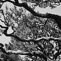 Wild Branches by Carol Groenen