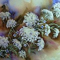 Wild Carrot -queen Anne's Lace Vignette   by June Conte  Pryor