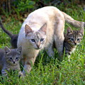 Wild Cats In Hialeah by Lenin Caraballo