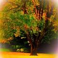 Wild Cherry Tree In Summer Sun by Debra Lynch