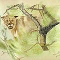 Wild Cougar by Daniel Shuford
