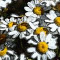 Wild Daisies by Carol  Eliassen