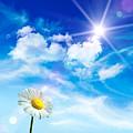 Wild Daisy In The Grass Against Bleu Sky by Sandra Cunningham