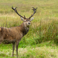 Wild Deer Animals   by Michalakis Ppalis