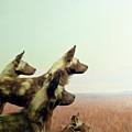 Wild Dog by Zena Zero