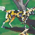 Wild Dogs by Caroline Davis