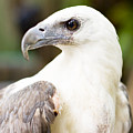 Wild Eagle by Jorgo Photography - Wall Art Gallery