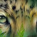 Wild Eyes - Amur Leopard by Carol Cavalaris