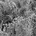 Wild Florida Ferns by Juergen Roth