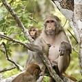 Wild Florida Monkies One by Jack Norton